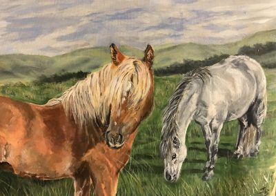 'Dartmoor Natives'